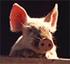 farmdogfan's Photo